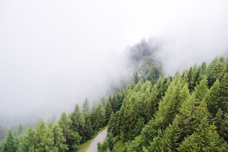 High Angle View Of Trees Amidst Fog