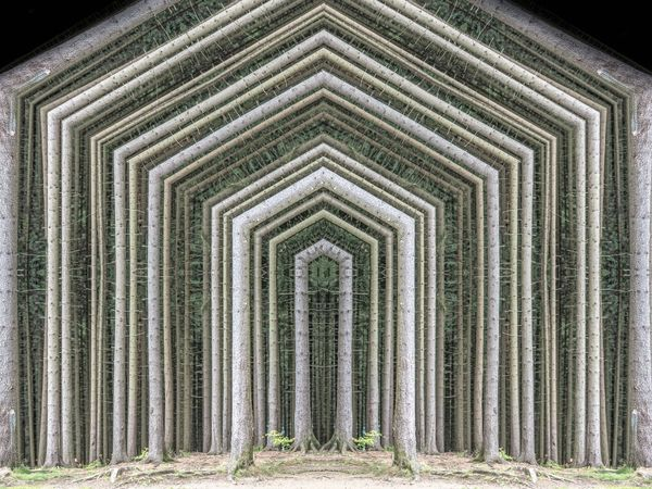 Trees Wood Arch Caleidoscope House Processed Image Symmetry Symmetryporn Trunks