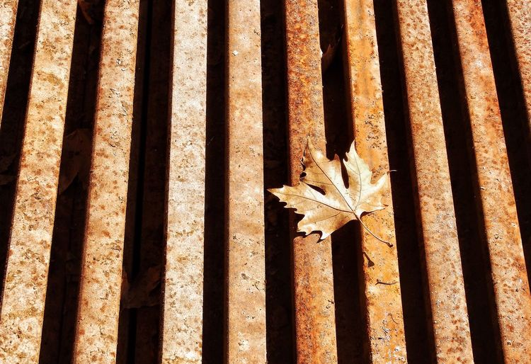 Leaf Season  Dry Change Autumn Fallen Autumn Autumn Colors Autumn Leafs Autumn Collection Natural Condition Tranquility Beauty In Nature Maple Leaf Leaves No People Fragility Tranquility Art Is Everywhere