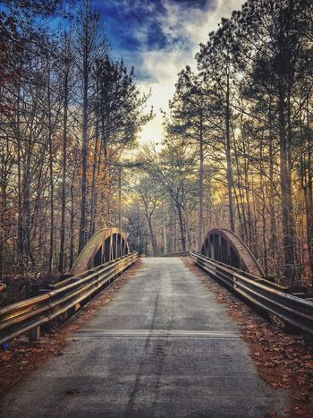 Cross over The Way Forward Tree No People Transportation Forest Day Outdoors Road Bare Tree Sky Nature Footbridge Beauty In Nature