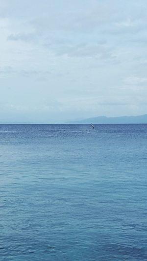 Nature Dolphin Taveuni Island Ocean View Blue Sky Estate Life