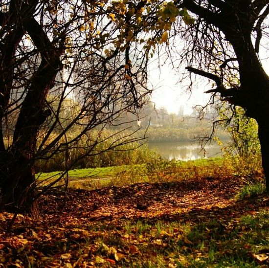Autumn Autumn Colors Nature Hello World краски природы Rassia Dream Photography Обрывки памяти Leaves