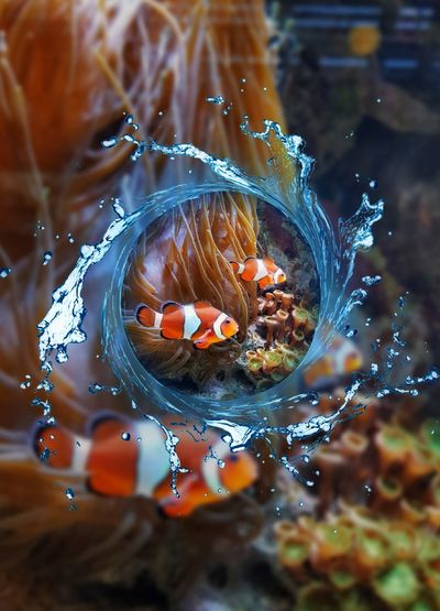 ...and he is not alone 😋 Swimming Coral View Of A Mermaid Nature EyeEm Best Shots EyeEm Best Edits Water Sea EyeEm Nature Lover Beauty In Nature Fish Nemo Underwater Water Close-up High-speed Photography Splashing Flowing Water Focus On The Story The Creative - 2018 EyeEm Awards