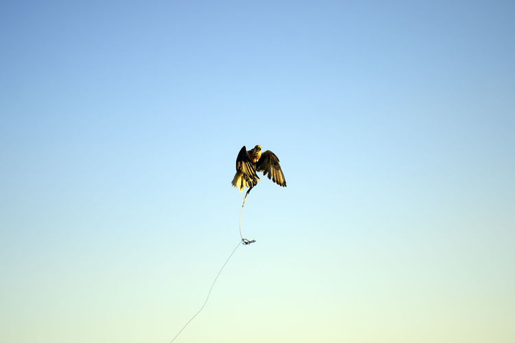 Low angle view of butterfly flying in sky