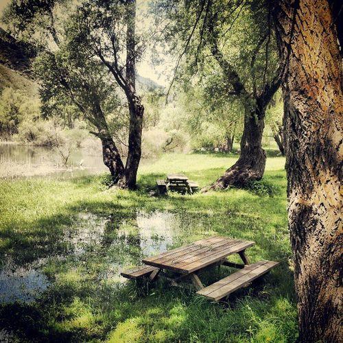 La primavera també ho té això... Molleradescalarre Salixalba Nature Green grass water treescollection tree__captures