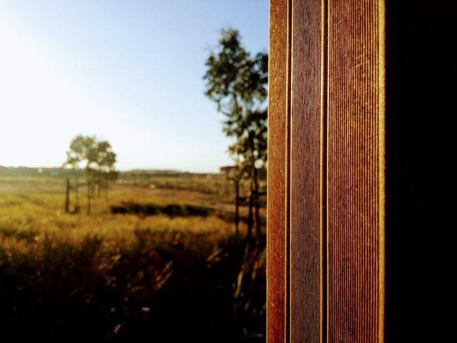 Clarity ✨ Wood Sun Set Australia EyeEmNewHere GALAXY S4