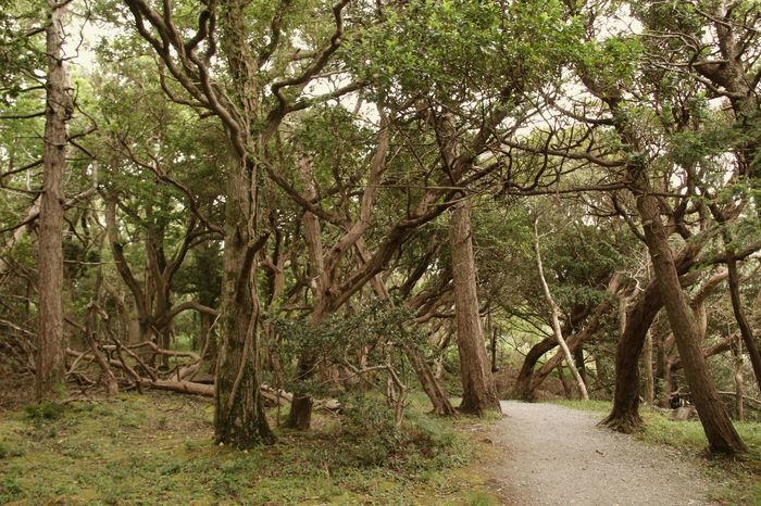 Forest in Ireland Beauty In Nature Branch Day Forest Forest Collection Forest Path Forest Photography Growth Ireland Ireland Landscapes Ireland🍀 Landscape Landscape #Nature #photography Landscape_Collection Landscape_photography Nature Nature Photography Nature_collection No People Outdoors Scenics Tranquility Tree