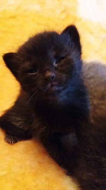 Kittens Kittens Of Eyeem Cats Black & White Precious Pets Pets Animal