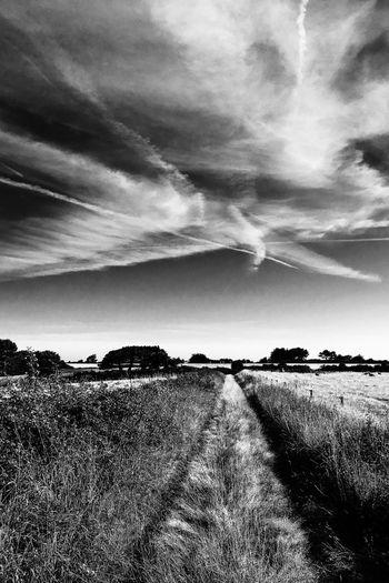Chemin Grass