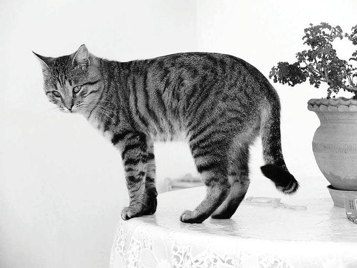Cat♡ Blacckandwhite