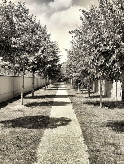Empty footpath by trees against sky
