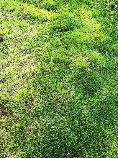 Grass Grassgreen