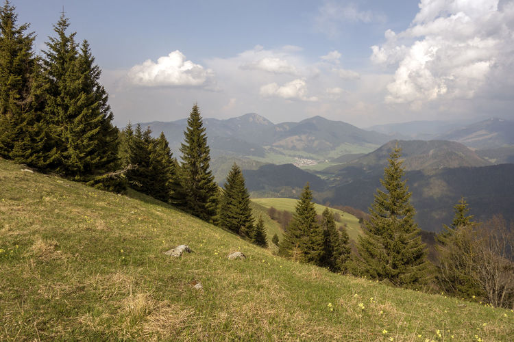 landscape Donovaly Slovakia Velka Fatra Beauty In Nature Cloud - Sky Coniferous Tree Day Environment Grass Green Color Growth Idyllic Land Landscape Mountain Mountain Range Nature No People Non-urban Scene Outdoors Pine Tree Plant Scenics - Nature Sky Tranquil Scene Tranquility Tree Zvolen