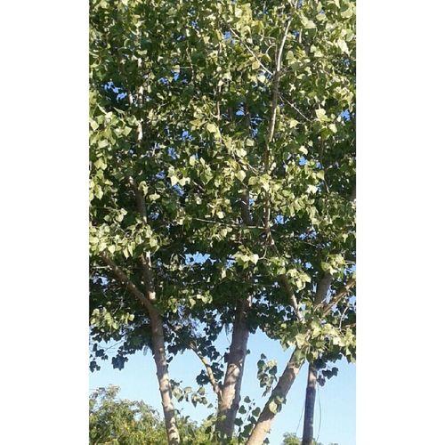 Naturelovers Nature Tree