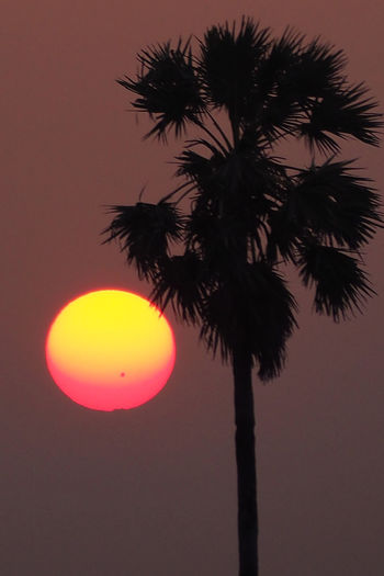 Giant Sunspot