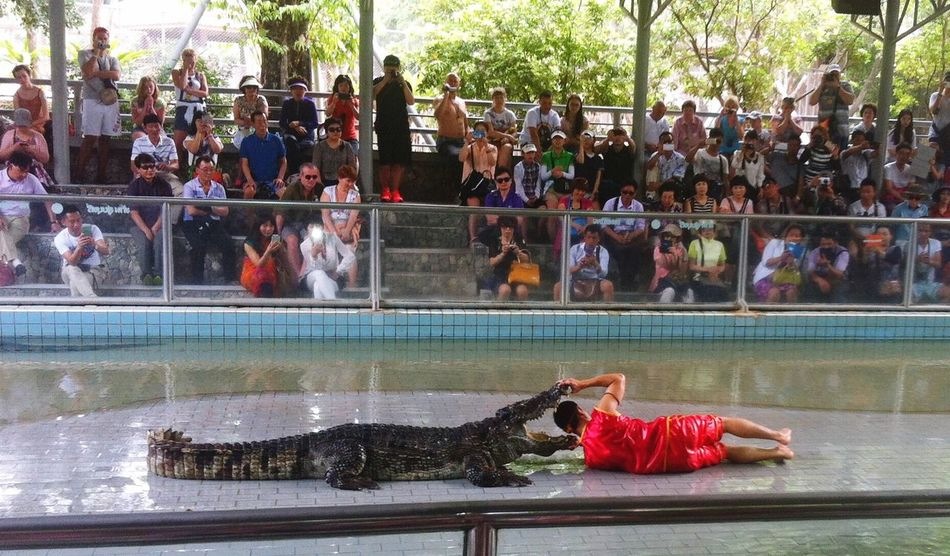 Adults Only Animal Themes Risktaker Aligator Thailand Entertainment Large Group Of People Real People Travel Destinations Day