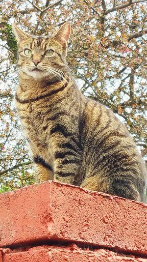 My cat! Spicy Pet Cat Garden Wall Oldham Pets Pets Corner Pets Of Eyeem Eye4photography  EyeEm Best Shots Animal_collection