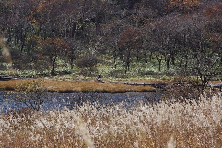 覚満淵 赤城山 秋 山の風景