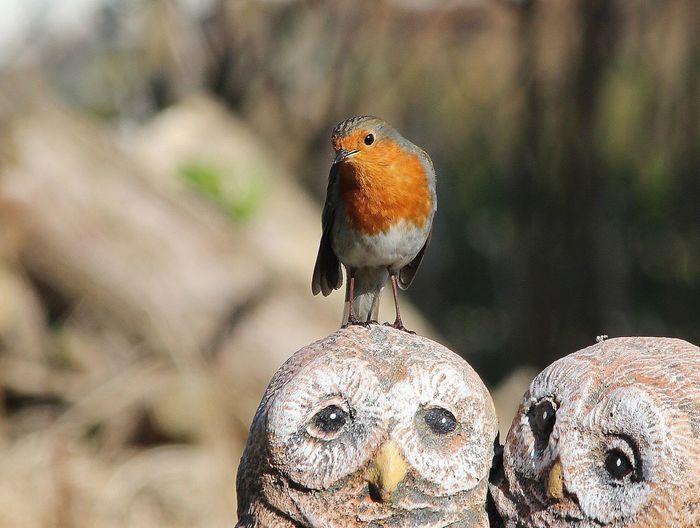 EyeEm Birds robins garden
