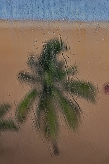 Palm tree through glass on rainy day Water Wet Nature No People Day Window Rain Close-up Glass - Material Transparent Sand Outdoors Beach Land Drop Full Frame Dirt Palm Tree