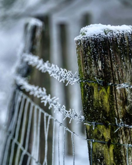 Cold Temperature Winter Focus On Foreground Close-up No People Snow Frozen Ice Nature Outdoors Freshness Beauty In Nature Weather