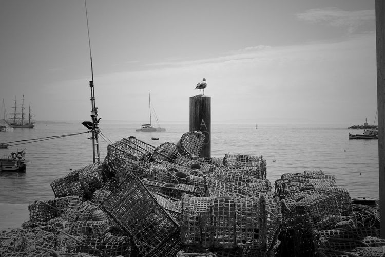 Rear View Of Seagull Perching On Pole By Fishing Nets And Sea Against Sky