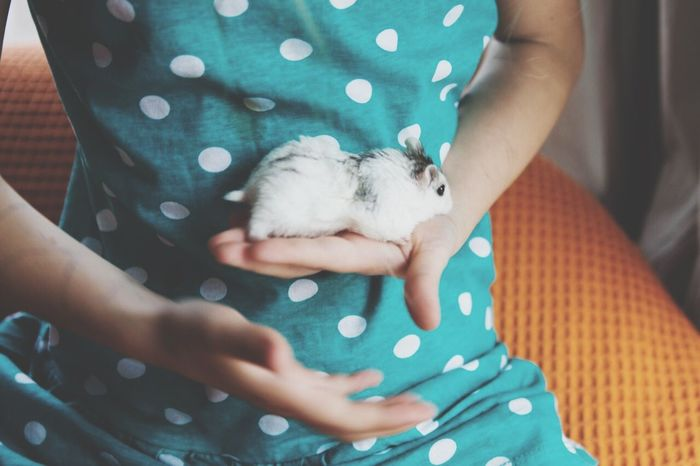 Warmness :) Pet Photography  Hanging Out have a nice day, dear all Hamster Hamster Love