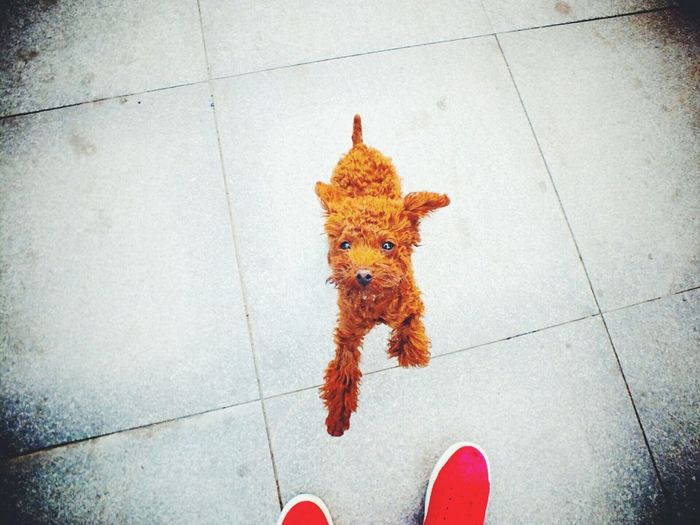 Playing With The Animals TEDDY LOVE Dog Walking VSCO Cam