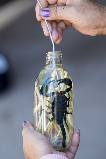 Cropped hand of woman holding glass bottle with scorpion