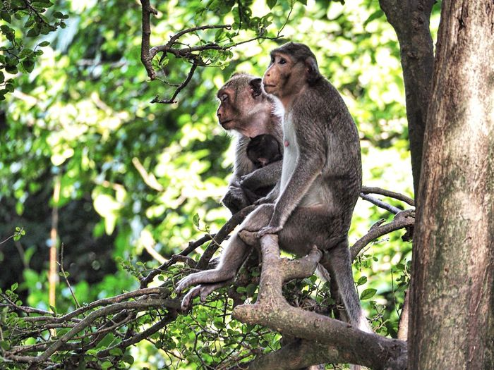Monkey Animals In The Wild