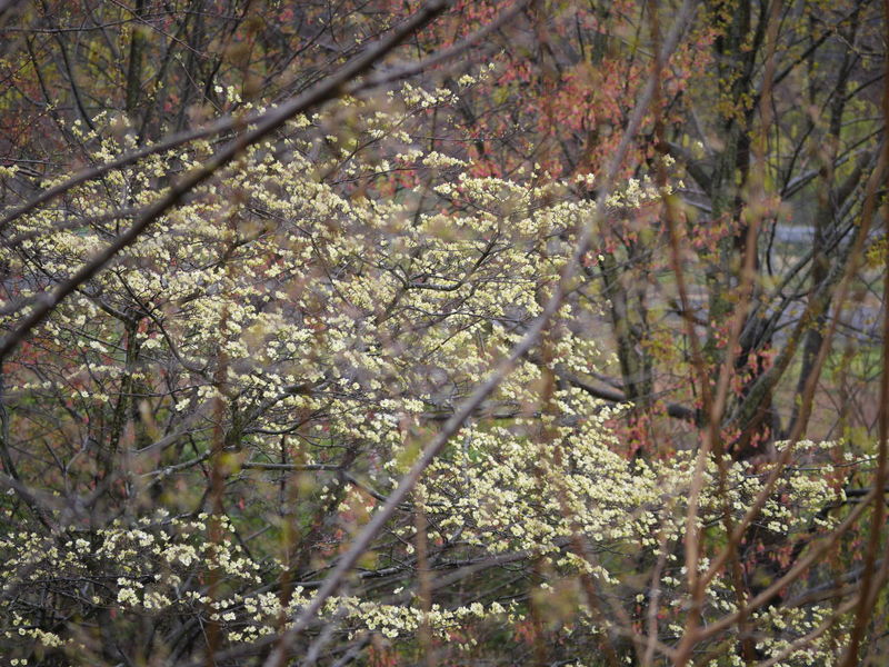 Bloom Blooming Bloooms Dogwood Dogwood Tree Dogwoodflowers Nature Nature Photography Spring Spring Flowers Spring2016 Springtime Tree Trees