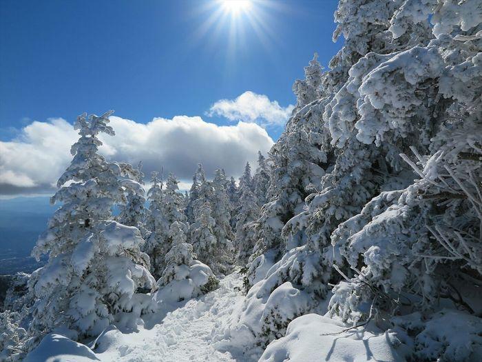 樹氷の間の散歩道❄ Enjoying Life Nature Mountains Snow Trees Landscape Clouds And Sky Japan EyeEm Nature Lover Outdoor Photography
