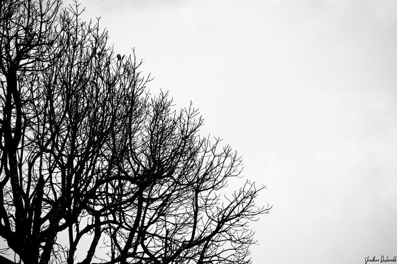 Monochrome Photography Silhouette Tree Bare Tree Clear Sky Nature Treetop Beauty In Nature Outdoors Non-urban Scene Majestic Tourism Branch Tree Silhouette Bare Tree Low Angle View Clear Sky Scenics Nature Beauty In Nature Tranquil Scene