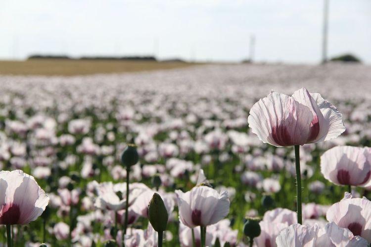 Un moment à la campagne...... Revenir a la couleur Flower Nature Love Landscape