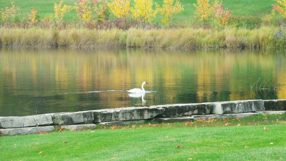 Swan Lake Fall Colors Colors Of Autumn Like A Paint