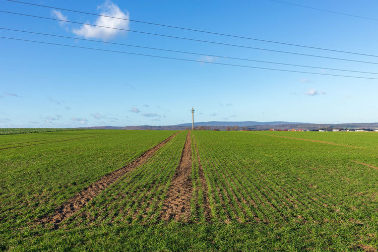 scenic view of agricultural field against sky Agriculture Beauty In Nature Cable Electricity  Environment Farm Field Green Color Growth Handymast Januar Land Landscape Nature No People Outdoors Plant Power Line  Power Supply Rural Scene Scenics - Nature Sky Stromleitungen Track Tranquil Scene Tranquility