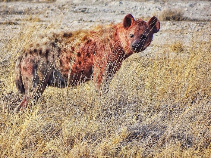 Enjoying Life Africa Animals Wild Life