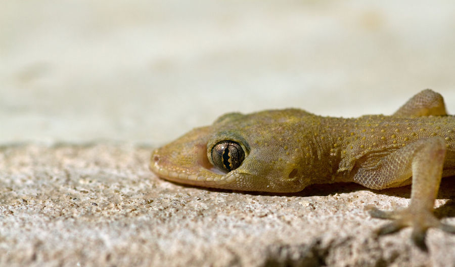 Close-up of a lizard on sand