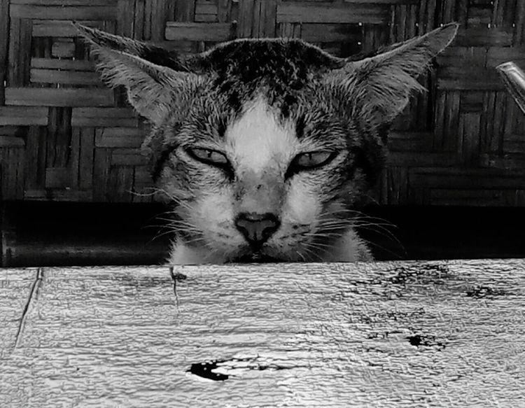 Meong Wait The Eyes Are The Windows To The Soul Quite Place Eating Dontcare Domestic Cat One Animal Pets Animal Themes Feline Looking At Camera