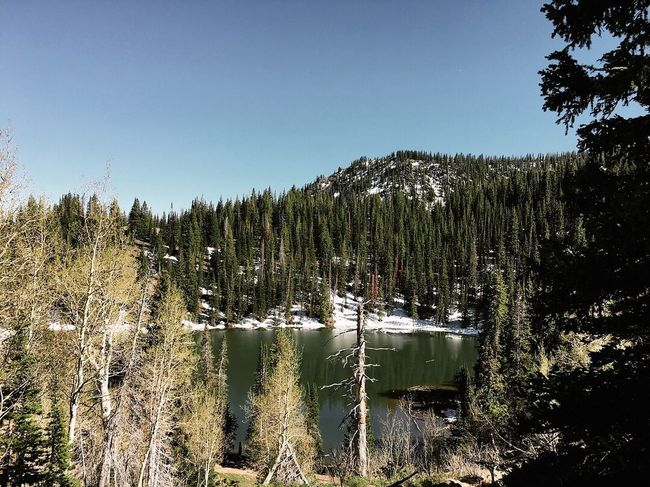 took a little hike today out to bloods lake (9,500ft). still a little snow up there. ⛰🦌 Wasatch Back Wasatch Mountains Heber City Utah Tree Plant Sky Growth Tranquility Beauty In Nature Tranquil Scene