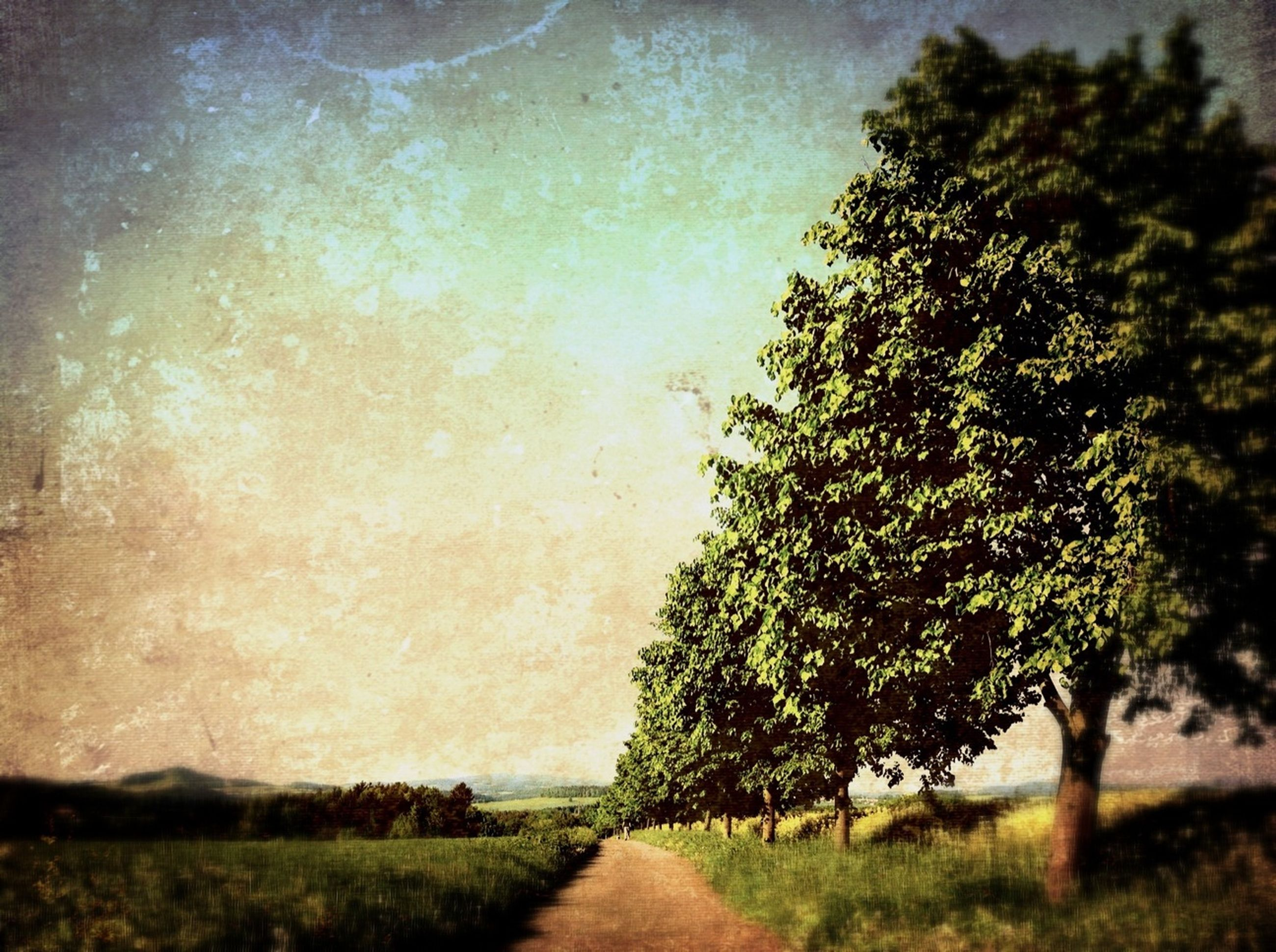 tree, the way forward, tranquility, tranquil scene, nature, road, growth, sky, beauty in nature, scenics, landscape, dirt road, field, grass, diminishing perspective, transportation, plant, street, outdoors, no people