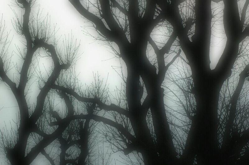 Trees Arbres Plappeville Lorraine