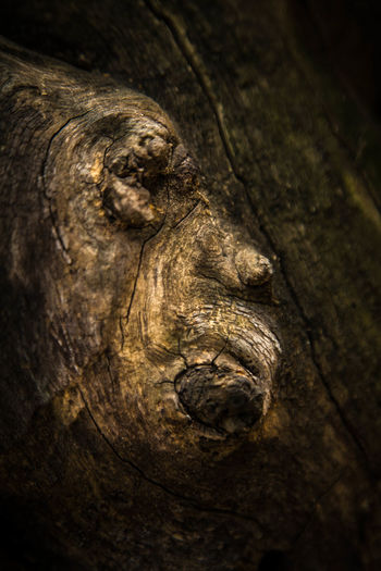 Beyond The Tangible Abstract Close-up Sculpture Sculputed Textured  Shape Face Wood Outdoors Nature No People Day