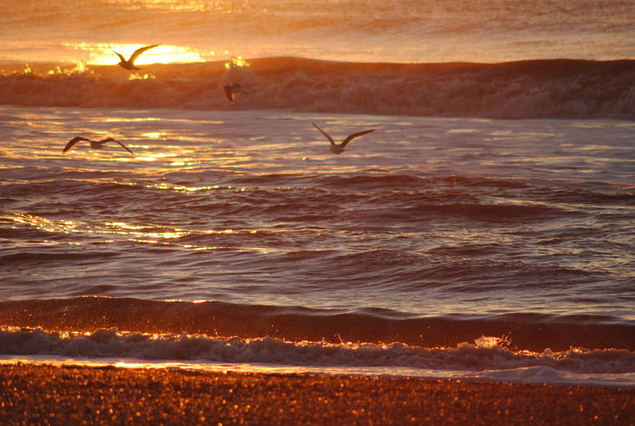 Sunset Beauty In Nature Nature Gold Colored Animal Wildlife Scenics Sea Ocean Waves, Ocean, Nature Waves Seagull Silhouette Golden Golden Hour Golden Sea Northsea Water Liquid Silhouette Naturelovers EyeEm Nature Lover No Edit/no Filter Denmark Denmark 🇩🇰 Hvide Sande
