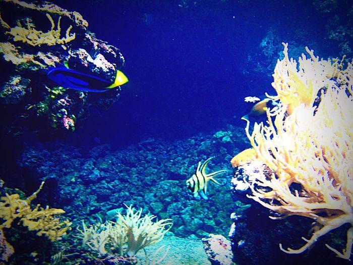 Fish coral Coral Water Underwater UnderSea Sea Animals In The Wild Animal Wildlife Sea Life Fish My Best Photo