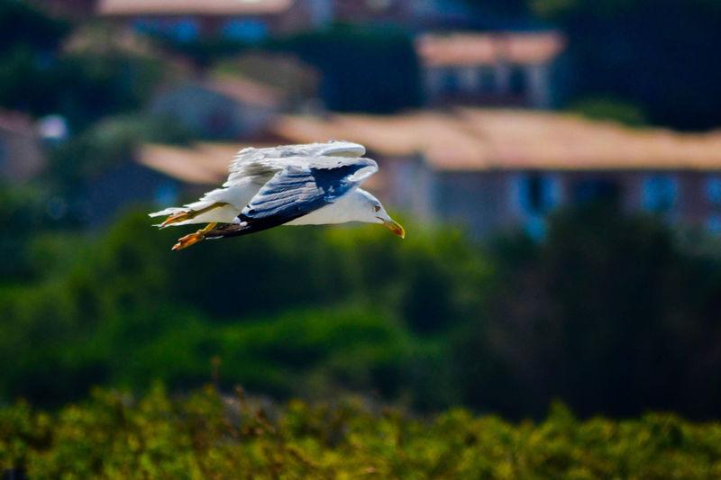 Liberté Libertá Gabbiani.... Summertime Summer Bird Flying Animal Themes Grass Close-up Spread Wings Flight Sea Bird Avian Eagle Migrating Eagle - Bird Seagull Blooming