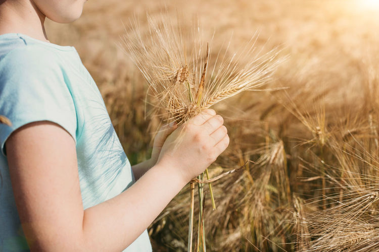 Midsection of woman holding wheat on land