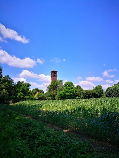 Bell tower at Peschiera Borromeo Postcards From Italy Abbey Culture And Tradition Italian Culture Visititaly Italy Arts Culture And Entertainment History Bell Tower Blue Sky Peschiera Borromeo Corn Field Fields And Sky Fieldscape Fields Of Green