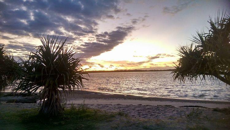 Australia Caloundra No People Goldenbeach Sand Pumicestonepassage Day Mornings Queensland Pandanus Tranquility Outdoors Sky Sunlight Water Beauty In Nature Nature Beach Sunrise Sea