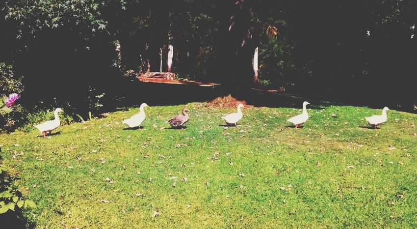The EyeEm Facebook Cover Challenge Nature Ducks Odd
